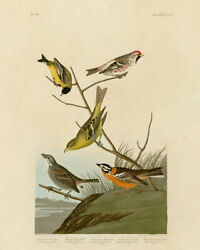 John Audubon Print - Finches And Other Birds