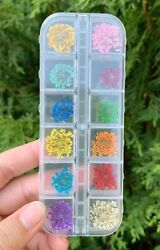 12 Colors Real Dried Flowers 3D Nail Art Decors Design DIY Set New In Box $6.99