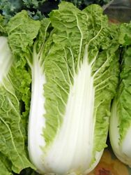 Michihili Chinese Cabbage Seeds NON GMO Variety Sizes FREE SHIPPING $2.79