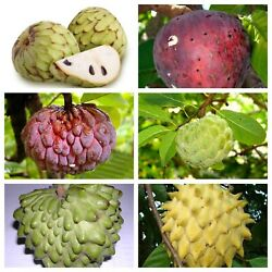 Exotic Tropical Fruits Seeds Mix 5 Each Variety USA SELLER . $30.00