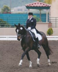 Horse And Rider 8 x 10 FOUND PHOTOGRAPH Color FREE SHIPPING Original  95 11 L $16.45