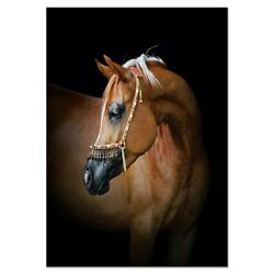 Horse Canvas Art Canvas Oil Painting Print Wall Picture Canvas Prints Wall Decor $12.98