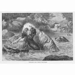 Scene with Otter Hounds and their Prey by Basil Bradley Antique Print 1873 GBP 12.95