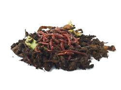  1000 COMPOSTING WORMS  RED WIGGLERS  Mite Free LIVE DELIVERY GUARANTEE $67.45
