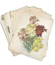 8 Used Vintage Flower Prints Supplement To The Garden $25.00