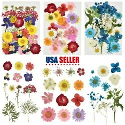 Real Dried Flowers for Resin MoldsSmall Pressed Flowers for Resin Suppl 5 Type $6.89