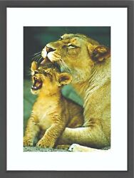 Exotic Animal Framed Art Photography - Lioness and Her Cub Wall Art Decor