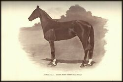 HORSE PRINT -  LARGE VINTAGE DOUBLE-SIDED PLATE 1906 -  James Butler - ARDELLE