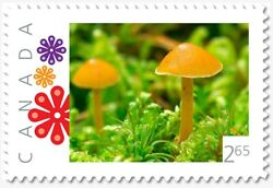YELLOW TOXIC MUSHROOM = 2.65 = Picture Postage Canada 2019 p19 11s01 $10.00
