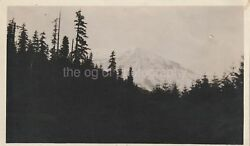 TREESCAPE Vintage FOUND PHOTOGRAPH bw FREE SHIPPING Original Snapshot 811 10 N $8.88