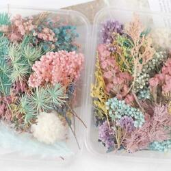 Real Pressed Dried Flowers For Art Craft Resin Pendant Jewellery DIY Making $4.44