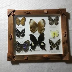 Real Wooden Framed Butterfly Collection Taxidermy Set $55.00