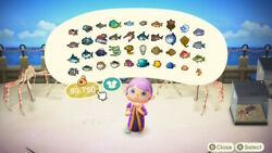 Complete Set All 80 Fish for Museum * Requires visit to my island * Pick up $6.79