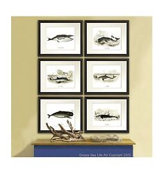 Antique Whale Art Prints set of 6 Nautical Boy bedroom Decor Wall Hanging Wall $44.00