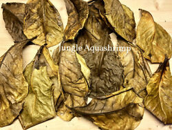 L-XL Catappa Leaves Indian Almond Leaves Discus Betta Crystal Red Cherry Shrimp $7.99