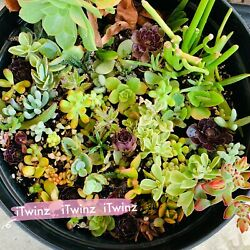 5 or 20 Cutting Assorted Succulent Cute 2quot;green Pink Red Live plant cactus Gift $16.99