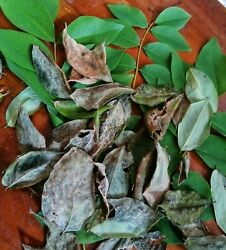 500Gliricidia Sepium Dried Leaves For Organic Natural Compost Manure For Plant $22.49