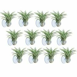 AIEVE Air Plants Holder Makes Air Plants Like Hanging in Air 12 Pack Tran... $15.48