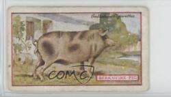 1921 Gallaher Animals amp; Birds of Commercial Value Tobacco Berkshire Pig #98 0n8