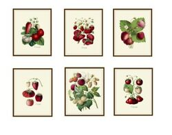 Set of 6 Vintage Botanical Art Print Poster Reproductions Strawberries 8