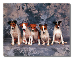 Jack Russell Terrier Puppy Dog Wall Picture Art Print $11.97