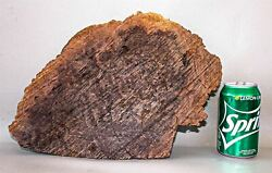 Red Mallee Exotic Wood Burl Cap Turning Casting Craft Wood  RML1583