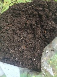 1LB vermicompost worm castings natural quality worms soil gardening $6.99