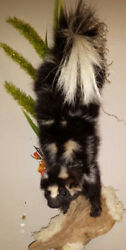 TAXIDERMY SPOTTED SKUNK..CIVETDRIFTWOOD WALL HANGMANCAVEFOXSHE SHEDFOLK ART