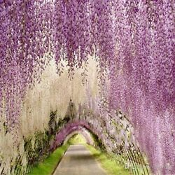 Hanging Flowers Wedding Vine Home Decoration Upscale Artificial Silk Wisteria