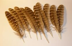 10 Natural Pheasant feathers 3