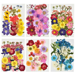 1 Pack Real Pressed Dried Flowers For Art Craft Resin Pendant Jewellery Making $7.99