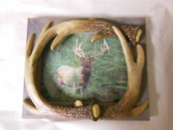 ELK Photo with Faux ANTLER FRAME f Wall or Desk HUNTING Decor WILDLIFE Unique