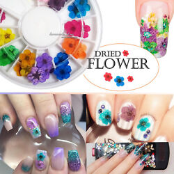 12 Colors 3D Decor Real Dry Dried Flower for LED Gel Acrylic Nail DIY Art Tips $3.88
