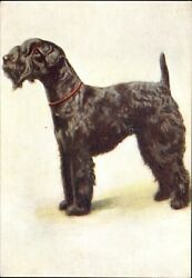 KERRY BLUE TERRIER dog~De Reszke Cigarette advertising postcard ~ embossed