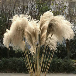 Natural Dried Flowers Pampas Grass Reed Bunch Bouquet DIY Wedding Party Decor $9.59