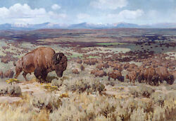 The Days of Bison by Carl Rungius Giclee Canvas Print Repro $34.99