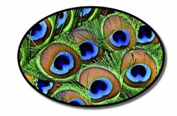 Peacock Feathers Oval Vinyl Sticker - SELECT SIZE