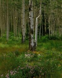 Aspen Forest; Crested Butte CO. Large Format 4x5 Color Photography 19