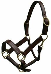 Yearling LEATHER Dark BROWN Adjustable HALTER with BRASS Hardware