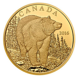 Canada 2016  $350 Iconic Canadian Animals Bold Black Bear  Pure Gold Coin