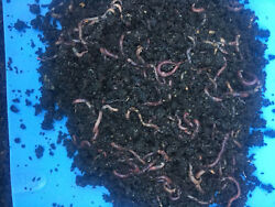 Redworm Wiggler Cocoons Baby Worms Colony Starter Kit 16OZ amp; Red Worm Grow Guide $15.97