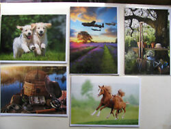 Birthday Cards Novelty Animals Events Friends Occasions People Puppies Garden GBP 1.45