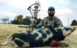 Wild Hog hunting in Texas Lodging and meals included $1495 $1650.00