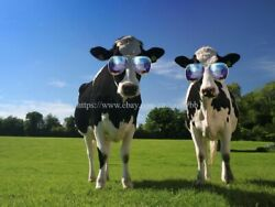 home art print wall decor funny cow paper poster $13.99