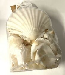 Pottery Barn White Beach Shells Decoration 30 oz New In Packages $42.99