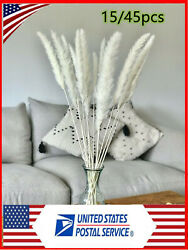 Pampas Grass Large White 15 45 stems 60cm Tall Dry Flower Decor Real Dried US $13.95