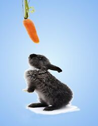 METAL FRIDGE MAGNET Dark Gray Rabbit Reaching For Hanging Carrot Rabbits Bunny $4.59