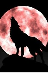 Dog Wolf Beautiful Aesthetic Nature Animal Pic Pet Sky Alien Full Moon Planet