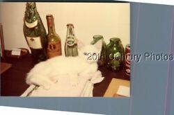FOUND COLOR PHOTO J+3649 WHITE CAT ON DESK WITH BOTTLES $6.98