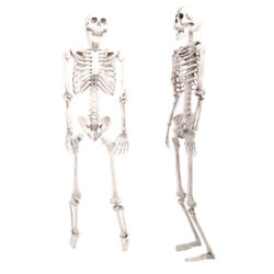 Pack of 2 Poseable Life Size Human Skeleton Prop Bones Halloween Party Decor 3FT $33.97